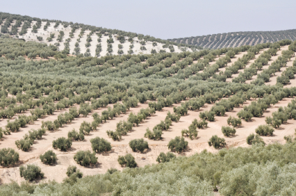 New legislation for olive oil use in restaurants approved by Spanish cabinet
