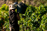 France retakes worldwide wine production top position from Spain