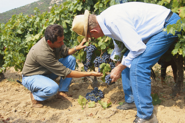 Spain leads the world in wine export volumes