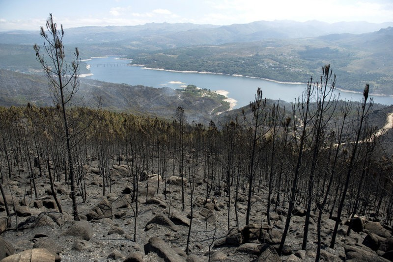 Over 7000 hectares razed by Ourense wild fires