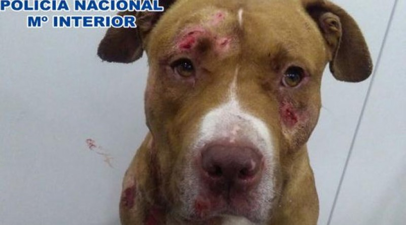 Five arrested for holding dog fights in Huesca