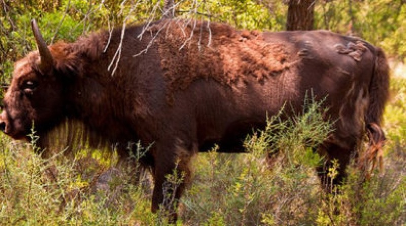 Valencia bison park manager accused of negligence over decapitation incident