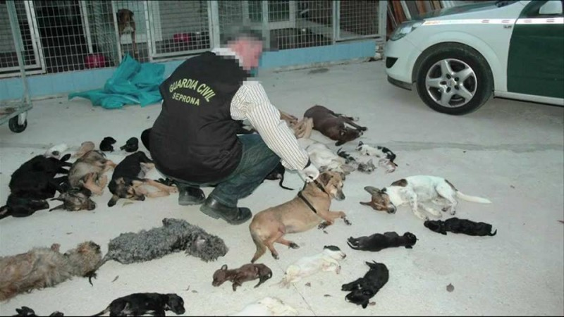 Torremolinos animal protection boss on trial for exterminating 2,000 animals