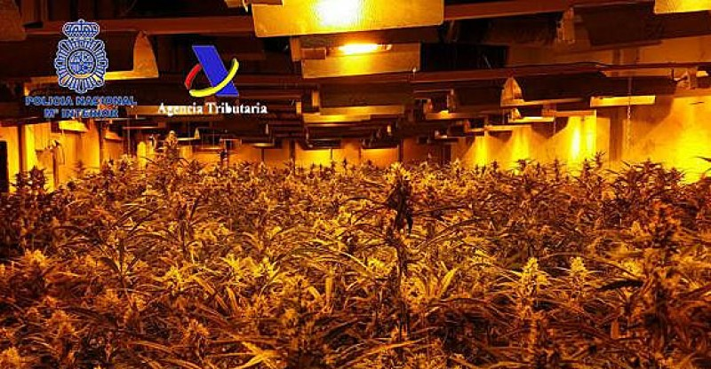 17,000 marijuana plants confiscated from Chinese-run premises in Madrid