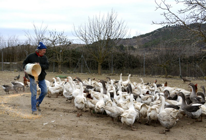 Palencia goose trainer in demand for Three Kings parades