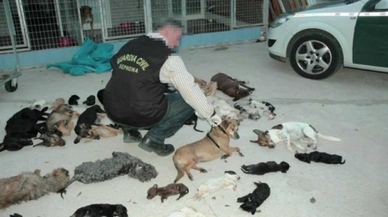 Prison for Torremolinos animal rescue centre boss who massacred 2,000 strays