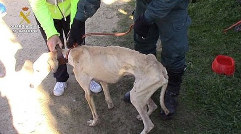 50 starving animals rescued from private property in Cadiz