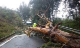 Winds of 145 km/h bring chaos to the Canaries