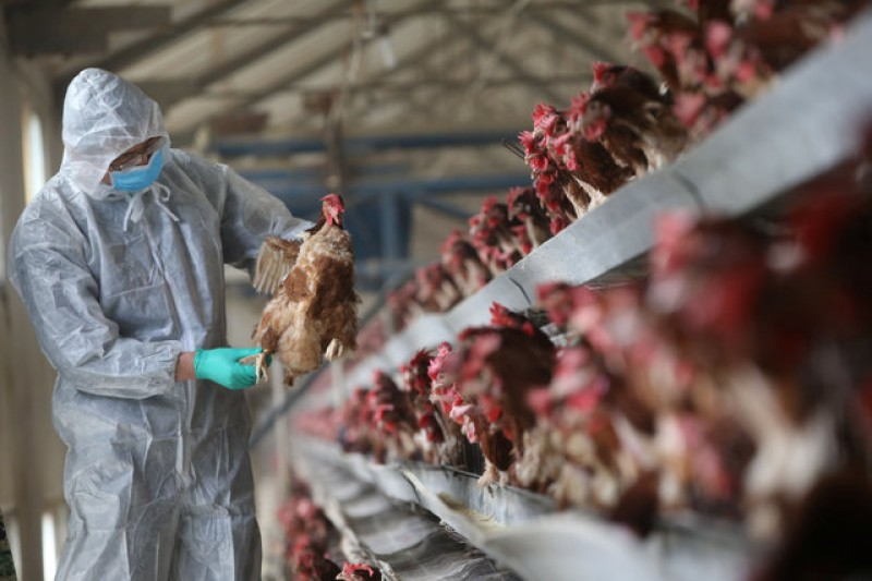 China bird flu deaths surge in what could be worst season ever