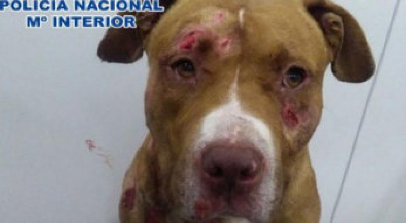 12-month suspended sentence for cruelty to dogs in Caceres