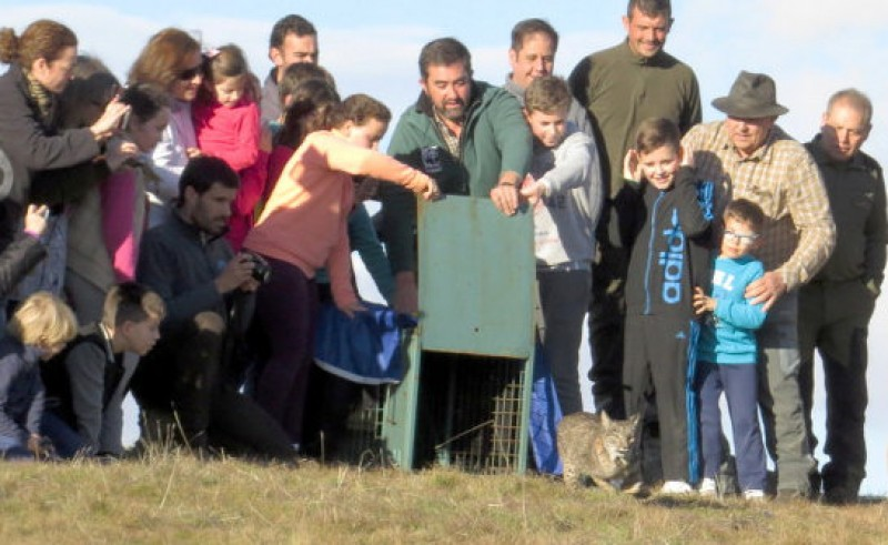 Five lynx released into the wild in Toledo and Ciudad Real