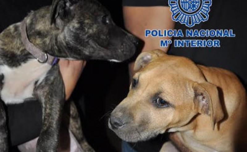 230 trained fighting dogs rescued from cruelty across Spain