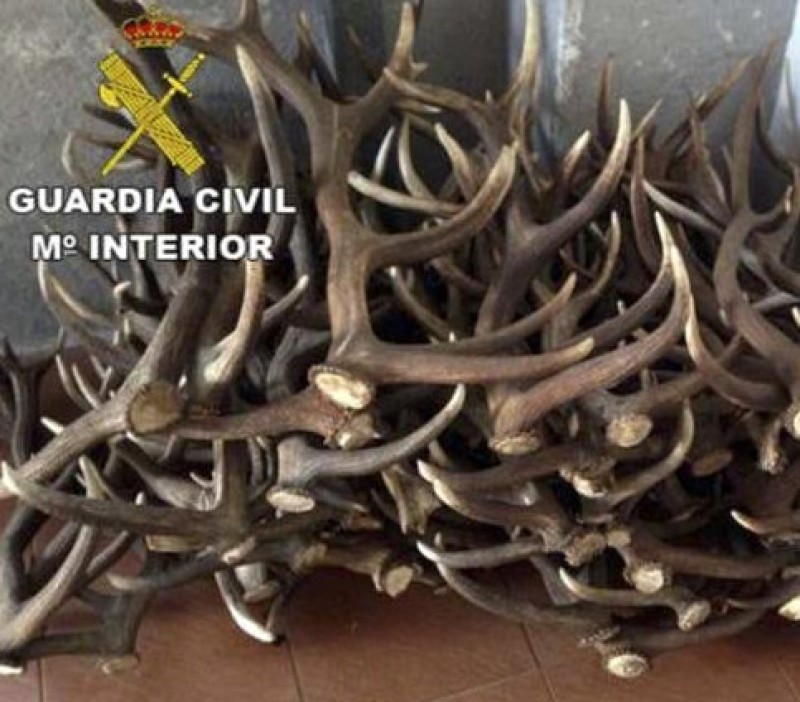 Huelva man faces charges after attempting to sell 100 antlers