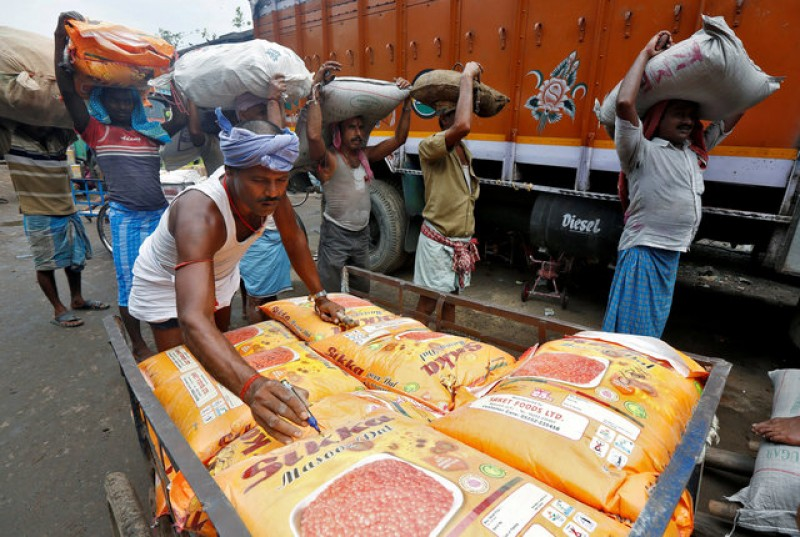 India farmers switch crops as lentil prices plunge