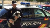 Spanish police warn of rise in dog theft all over the country