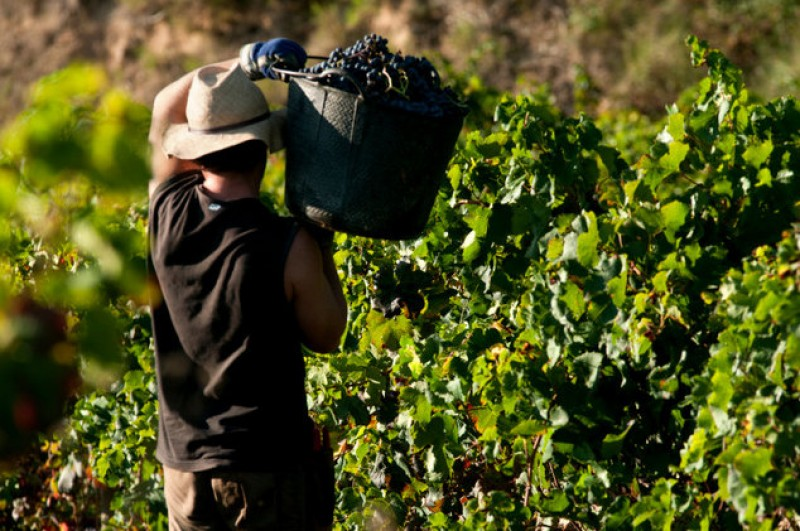 Wine consumption in Spain rises after decades of decline