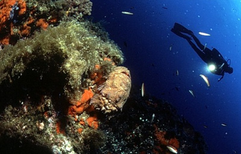 Diving centres and dive schools in Águilas