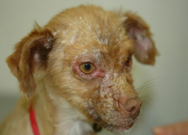 Get your dog vaccinated against Leishmaniasis if you live in Spain
