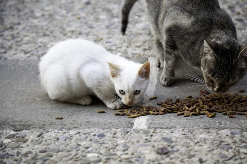 <span style='color:#780948'>ARCHIVED</span> - Malaga council works towards goal of not putting down any stray domestic animals