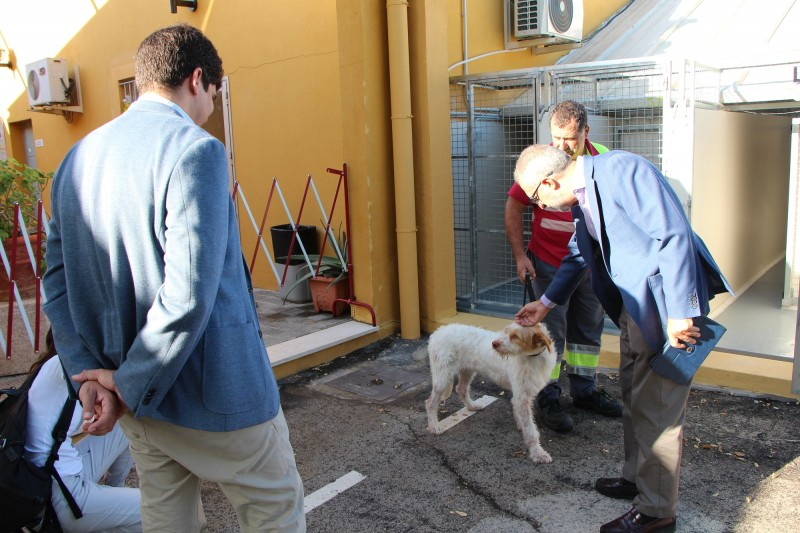 Seville announces free neutering and surgery for strays in bid to promote adoptions