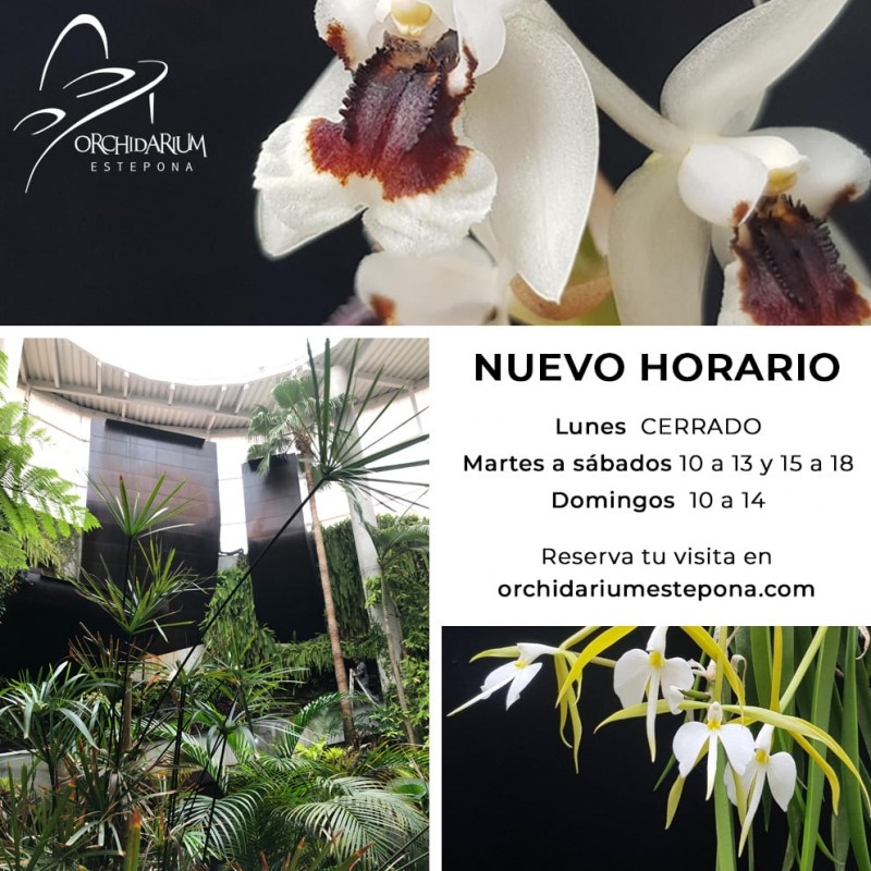 <span style='color:#780948'>ARCHIVED</span> - Flower of Etlingera elatior in Estepona Orchidarium can reach five metres in height