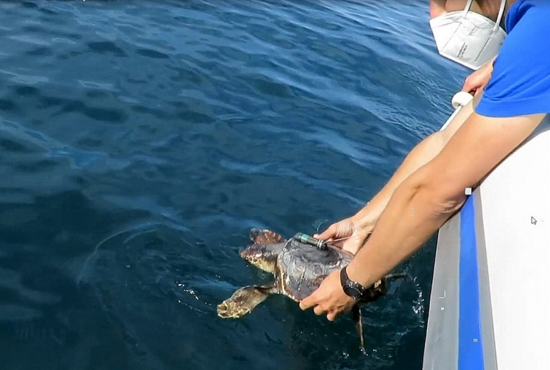 Rescued sibling turtles are returned to the sea off the Costa Blanca