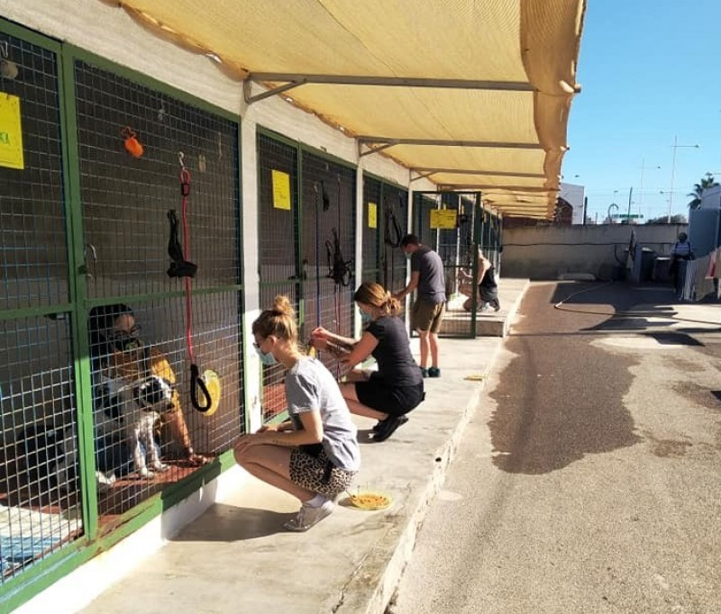 <span style='color:#780948'>ARCHIVED</span> - Torrevieja to invest 700,000 euros in new animal rescue shelter