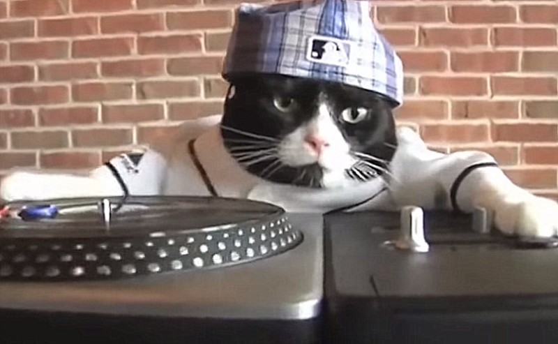 <span style='color:#780948'>ARCHIVED</span> - Feline DJ upsets residents of Lugo with loud music