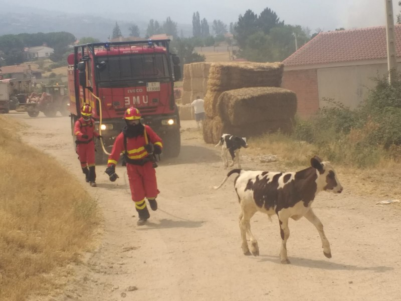<span style='color:#780948'>ARCHIVED</span> - 1,000 evacuated from their homes as Ávila wildfire affects 10,000 hectares