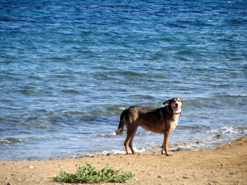 Animal rights activists demand full dog access to Spanish beaches