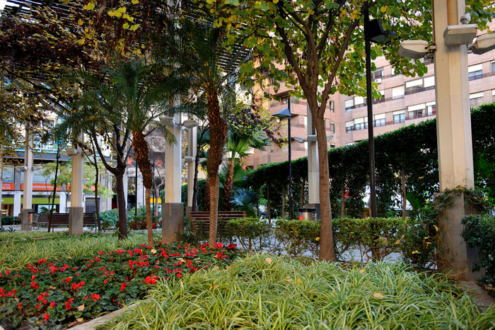 Block planting used with success in central Murcia